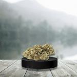 Fleurs de CBD Cheese Bud